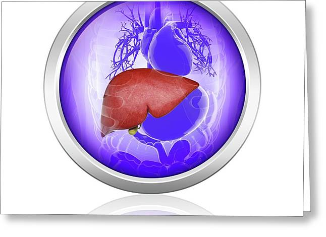 Human Liver And Gall Bladder Greeting Card