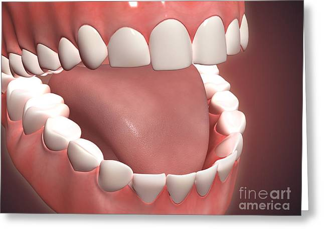 Human Mouth Open, Showing Teeth, Gums Greeting Card by Stocktrek Images