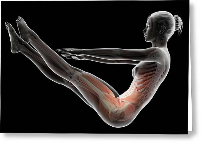 Human Musculoskeletal System Greeting Card by Sebastian Kaulitzki