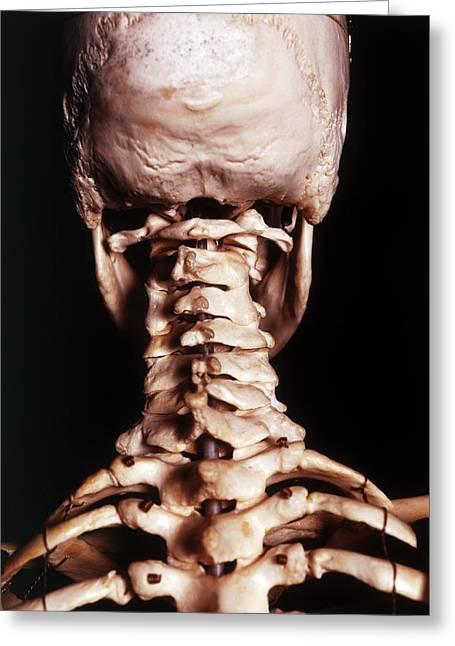 Human Skeleton Greeting Card by Dorling Kindersley/uig