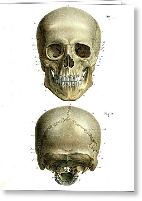 Human Skull Greeting Card by Collection Abecasis