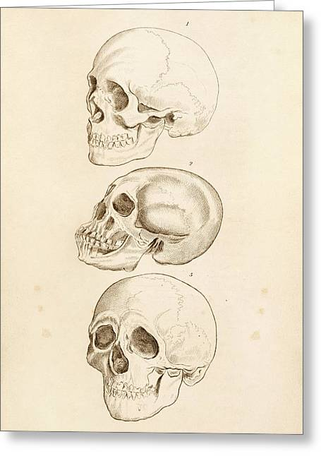 Human Skulls Greeting Card by King's College London