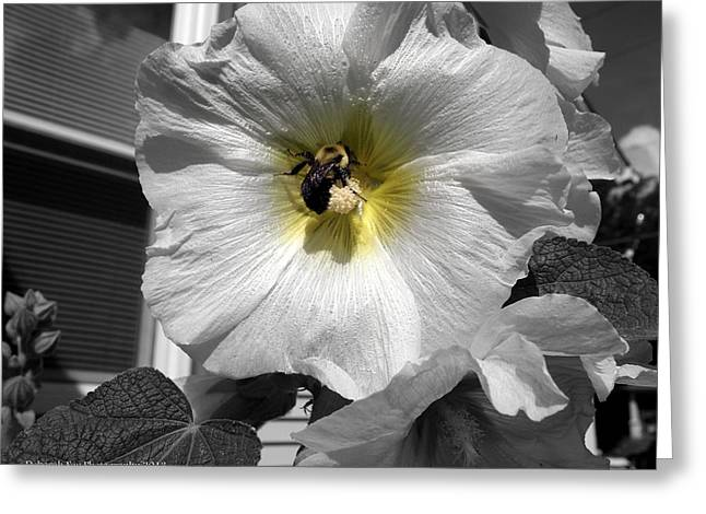 Humble Bumblebee Greeting Card by Deborah Fay