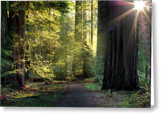 Humbolt Trail Greeting Card by Leland D Howard