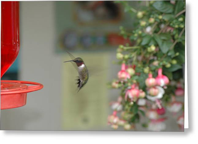 Greeting Card featuring the photograph Hummer by David Armstrong