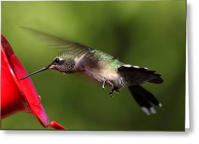 Look Hummingbird Eyelashes Greeting Card