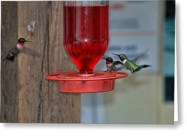 Greeting Card featuring the photograph Hummers by David Armstrong
