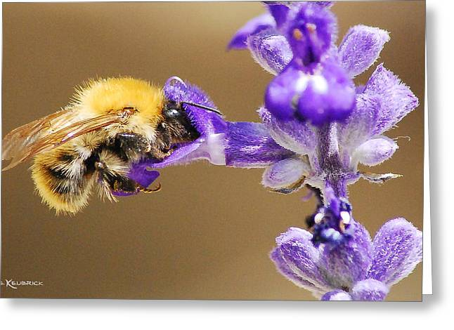 Greeting Card featuring the photograph Humming Bee  by Stwayne Keubrick