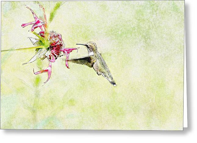 Humming Bird And Flower Greeting Card