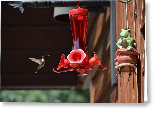 Humming Bird Awaiting Greeting Card by Bobbie Urbanczyk