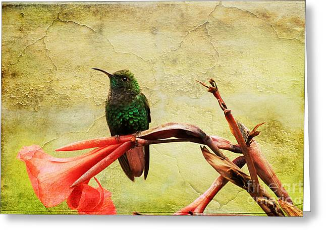 Hummingbird 1 Greeting Card by Teresa Zieba