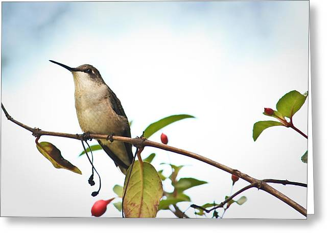 Hummingbird 2 Greeting Card by Tammy Schneider