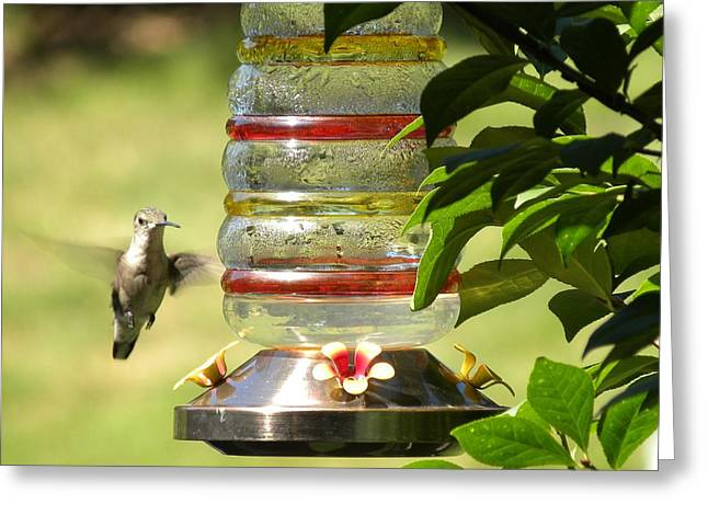 Greeting Card featuring the photograph Hummingbird - 2 by Teresa Schomig