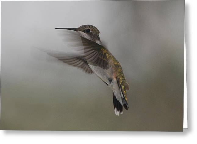 Greeting Card featuring the photograph Hummingbird 6 by Leticia Latocki