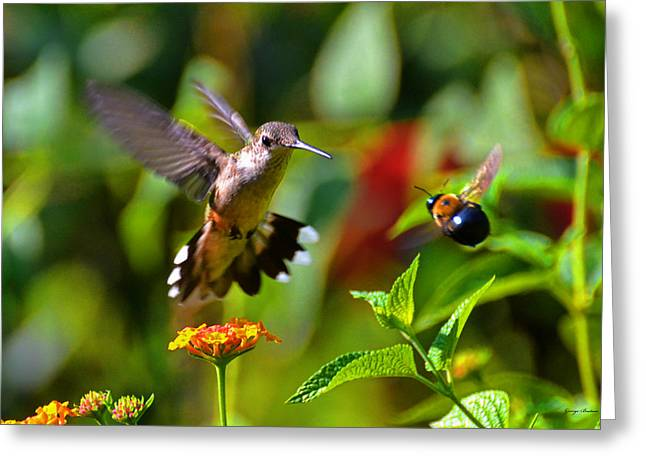 Hummingbird And A Bumblebee 001 Greeting Card