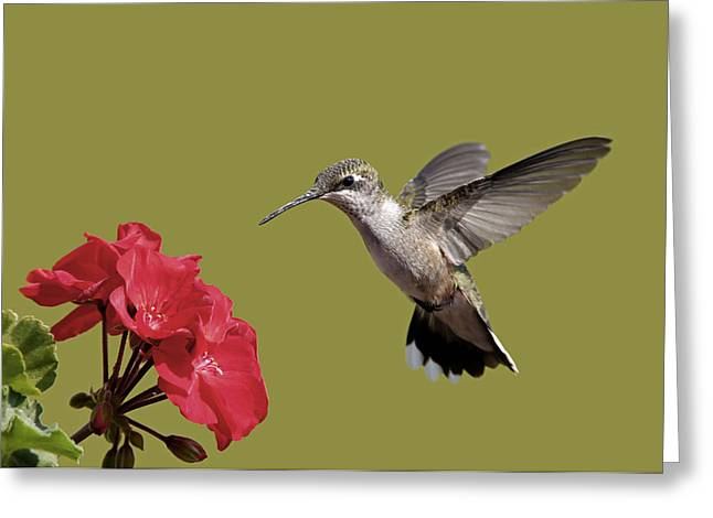 Hummingbird And Geranium Greeting Card by Gerald Marella