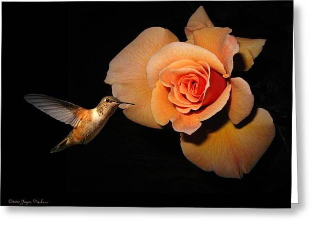 Hummingbird And Orange Rose Greeting Card by Joyce Dickens