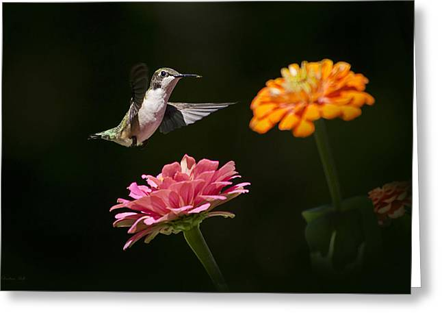 Hummingbird And Summer Blooms Greeting Card by Christina Rollo