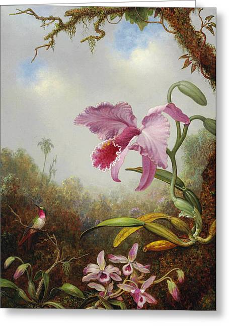 Hummingbird And Two Types Of Orchids Greeting Card