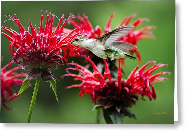 Hummingbird Angel Greeting Card by Christina Rollo