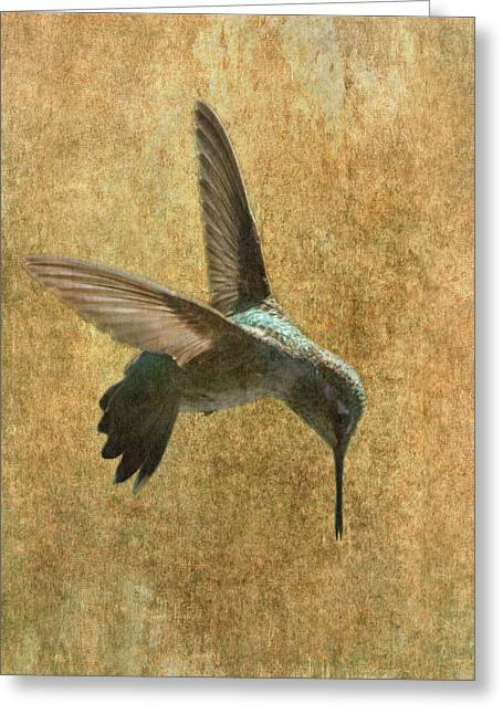 Hummingbird Greeting Card by Angie Vogel