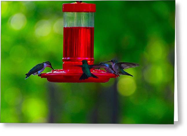 Hummingbird Art 392 Greeting Card