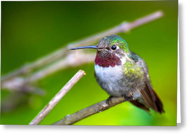 Hummingbird At Sunset Greeting Card by Mark Andrew Thomas