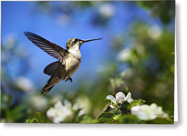 Hummingbird Beauty In Flight Greeting Card by Christina Rollo