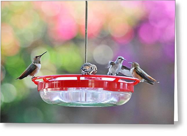 Hummingbird Cafe Greeting Card by Lynn Bauer