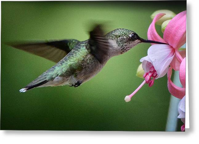 Hummingbird Carbs Greeting Card