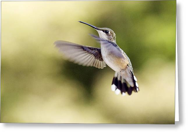Greeting Card featuring the photograph Hummingbird by David Lester