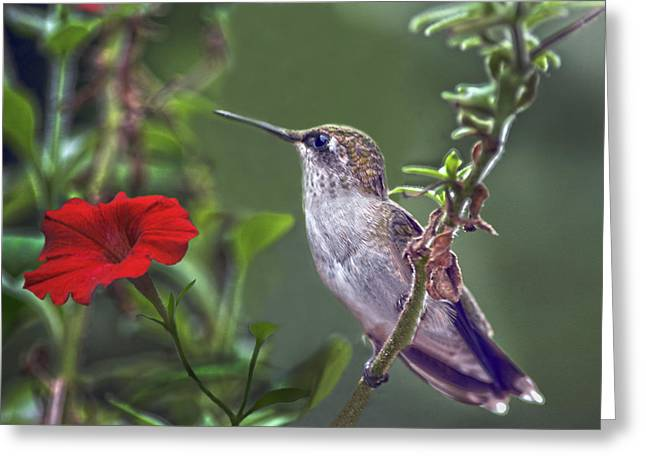 Hummingbird Delight Greeting Card by Sandi OReilly