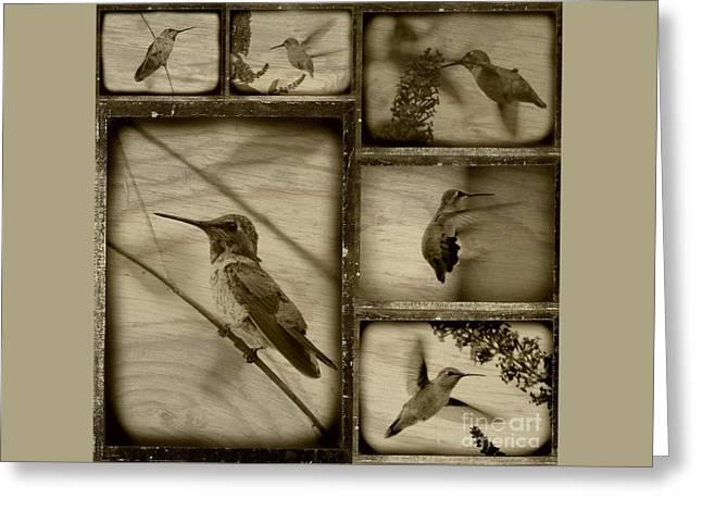 Hummingbird Family Portraits Greeting Card by Carol Groenen
