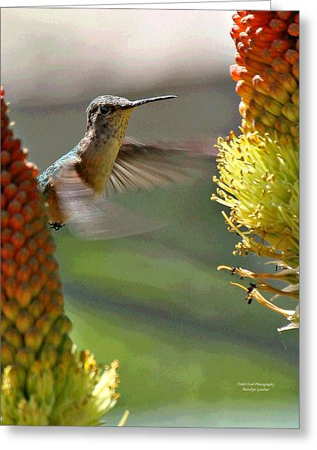Hummingbird Feeding Greeting Card