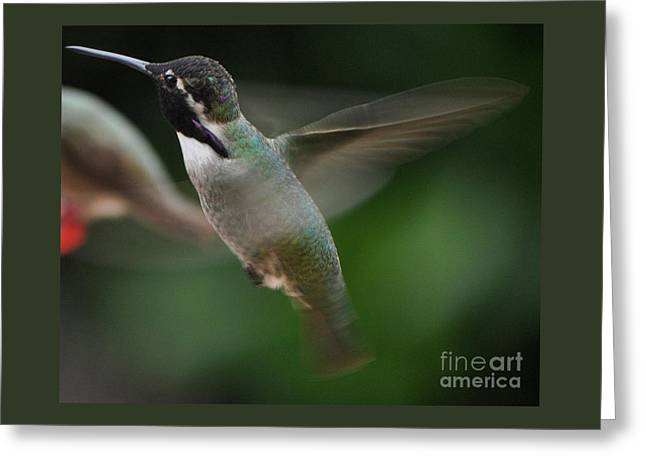 Greeting Card featuring the photograph Hummingbird Male Anna In Flight Over Perch by Jay Milo