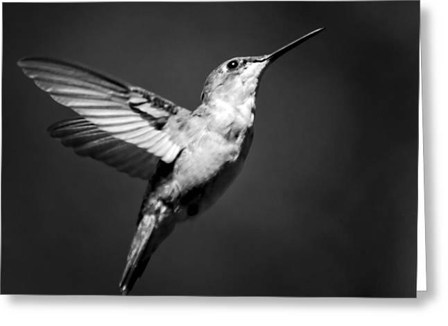 Hummingbird Flight Bw Square Greeting Card