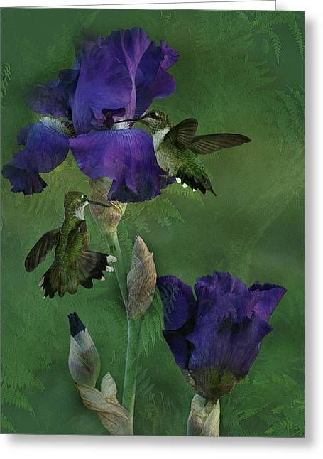 Hummingbird Gathering Greeting Card by TnBackroadsPhotos