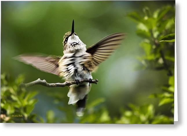 Hummingbird Happy Dance Greeting Card by Christina Rollo