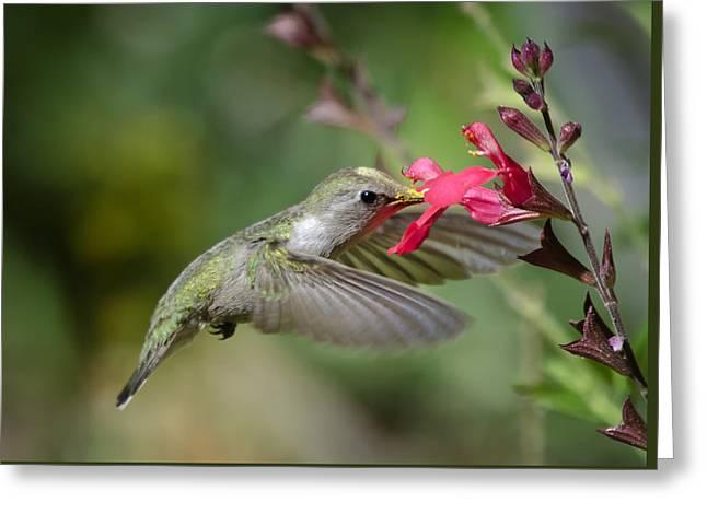 Hummingbird Heaven  Greeting Card by Saija  Lehtonen