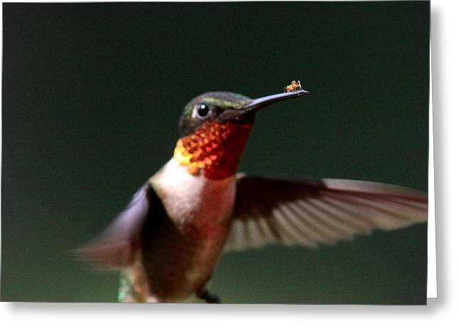 Hummingbird - Hitching A Ride - Ruby-throated Hummingbird Greeting Card by Travis Truelove