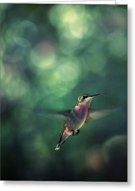 Hummingbird Hovering Greeting Card by William Schmid