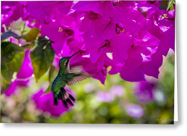 Greeting Card featuring the photograph Hummingbird In A Garden Paradise by Phil Abrams