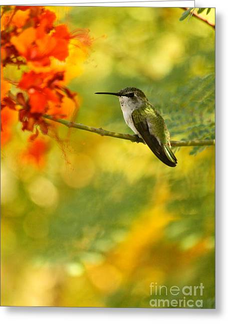 Hummingbird In A Painting Greeting Card by Michael Cinnamond