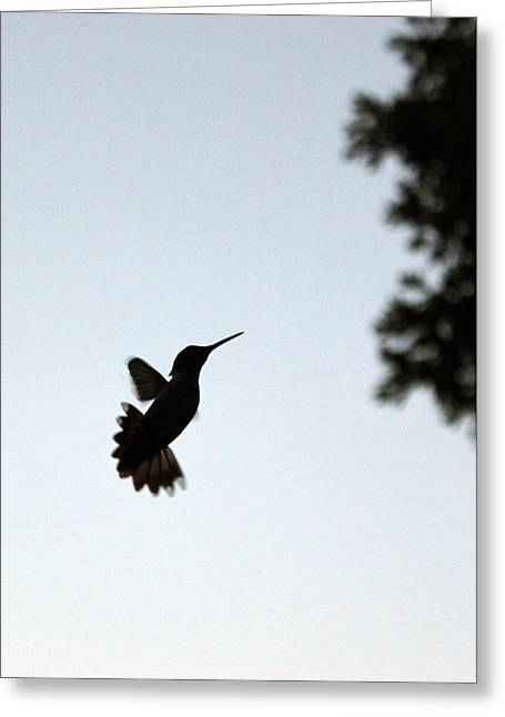 Hummingbird In Action Greeting Card by Kelly Howe