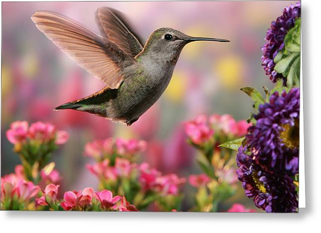 Hummingbird In Colorful Garden Greeting Card