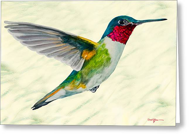 Da103 Broadtail Hummingbird Daniel Adams Greeting Card