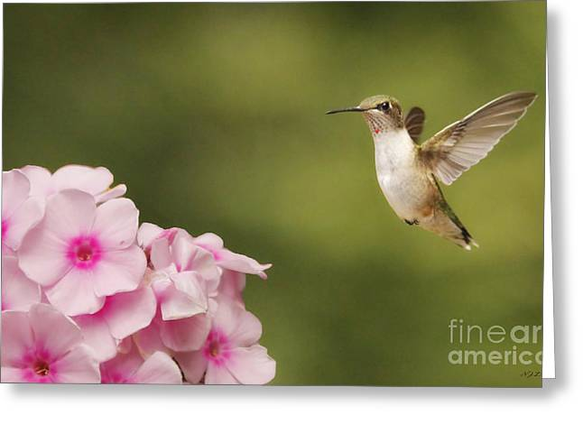 Hummingbird In Flight Greeting Card by Nancy Dempsey