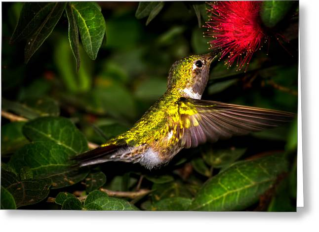 Hummingbird In Motion Greeting Card by Mark Andrew Thomas