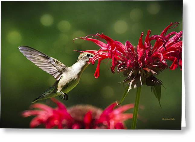 Hummingbird Indulgence Greeting Card by Christina Rollo
