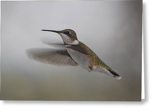 Greeting Card featuring the photograph Hummingbird  by Leticia Latocki